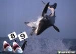 Salto de Tiburon