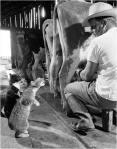A comer pinche gato