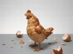 que fue primero_elhuevo_lagallina_o la gallinahuevo