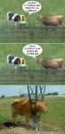 Andele Vaca Mensa