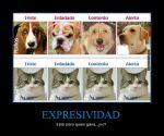 CR_305670_expresividad