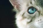 Solo otro pinche gato