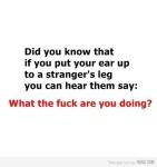 Sabias que si pegas tu oido en la pierna de un extraño podras escucharlo decir... que chingados estas haciendo