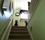 algun dia ese gato te matara