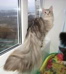 El Gato Plumero.. porfin un gato sirve para algo