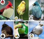 Estos son los angry birds en la realidad