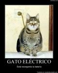 El gato electrico