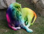 Esta es una rara enfermedad donde las especies tiendes a cambiar de color.. se llama arcoiritis