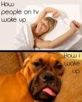 como despiertan en la TV y como yo despierto