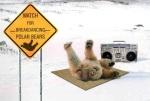 osos polares breakdancers... cuidado